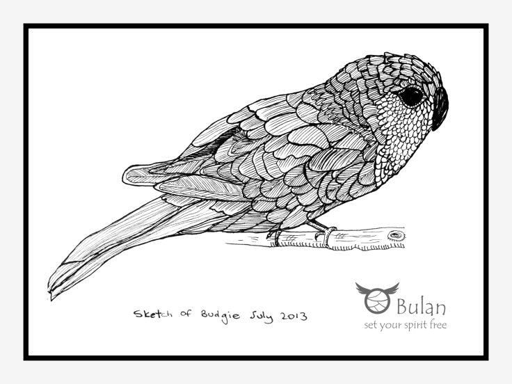 Sketch of budgie