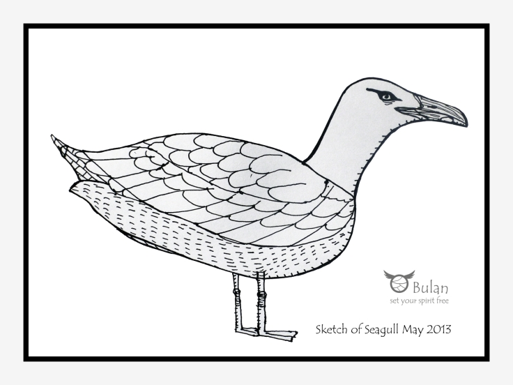 Sketch of Sewart the seagull