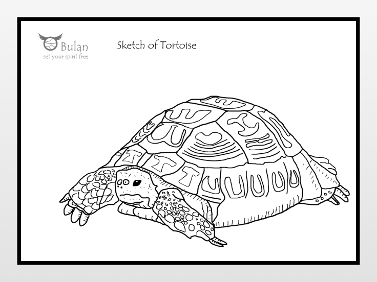 Sketch of tortoise