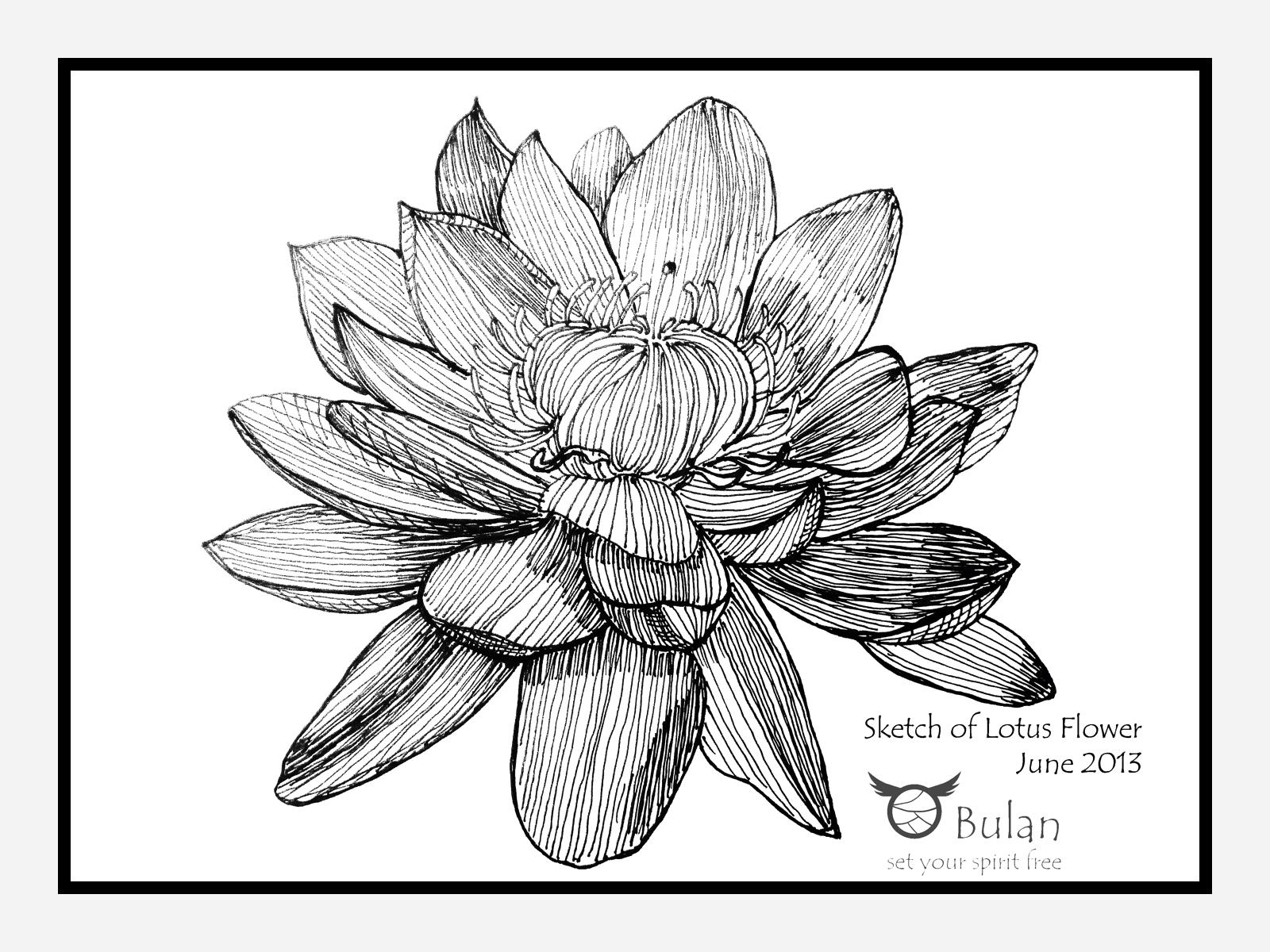 Sketch of flower Lotus