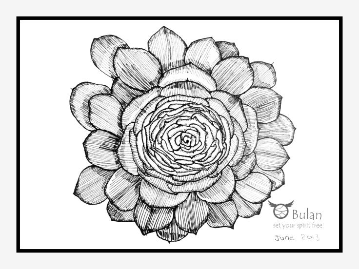 Sketch of desert plant