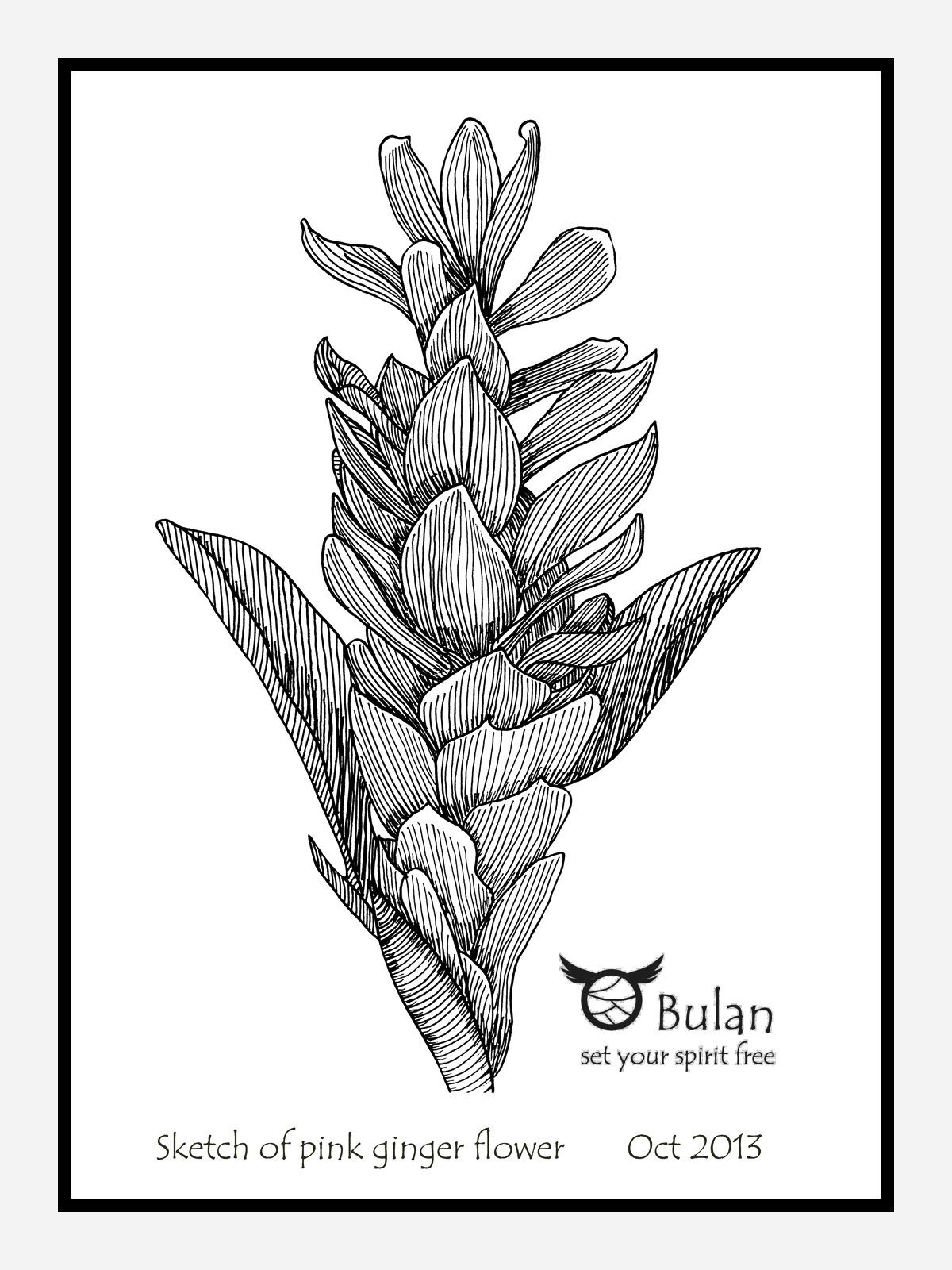 Sketch Of The Day No 169 Pink Ginger Flower In Penang