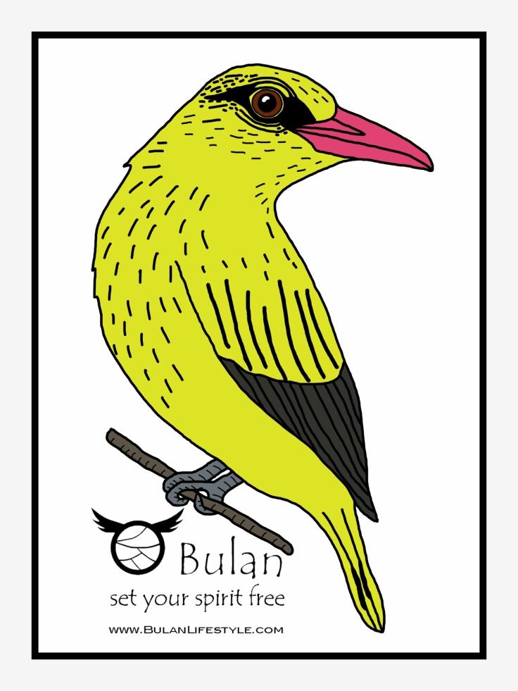 Kip Kip the oriole bird in colour
