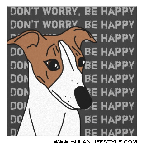 """Don't worry. be happy"", Buddy the Whippet"