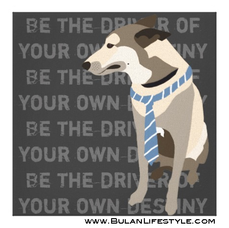 """Mojo the Belgian Malinois """"Be the driver of your own destiny"""""""