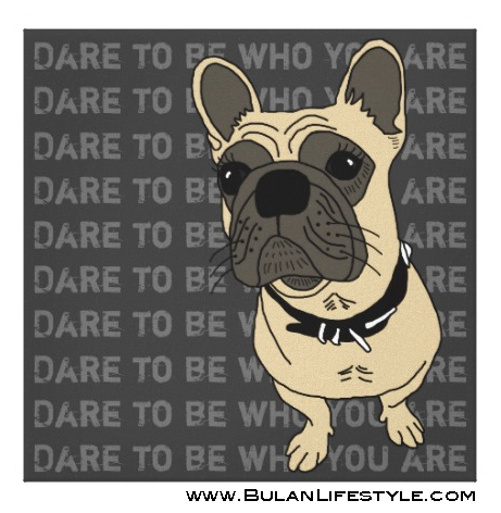 """Sheba the bulldog """"Dare to be different"""""""