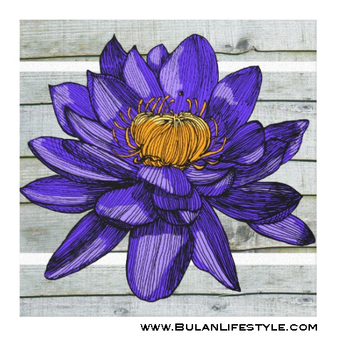 Sketch Of The Day No 271 Lily The Divine And Mystical Lotus Flower