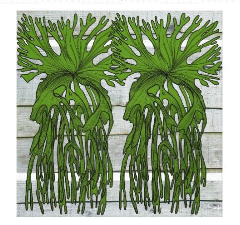 Staghron fern
