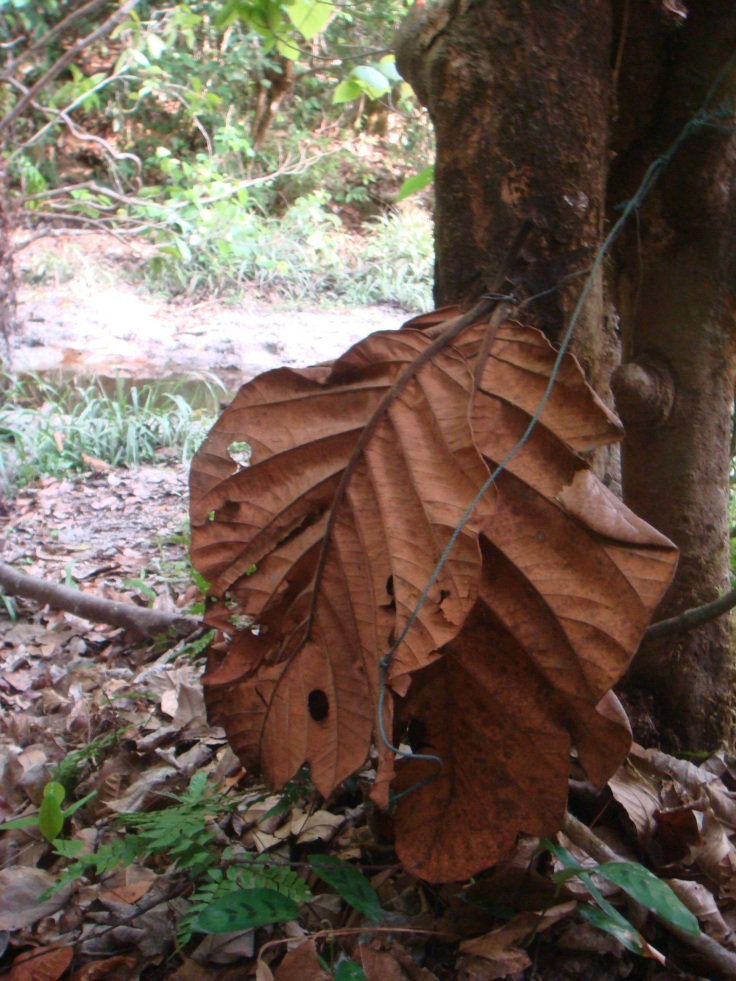 Poachers covered camera with giant leaves