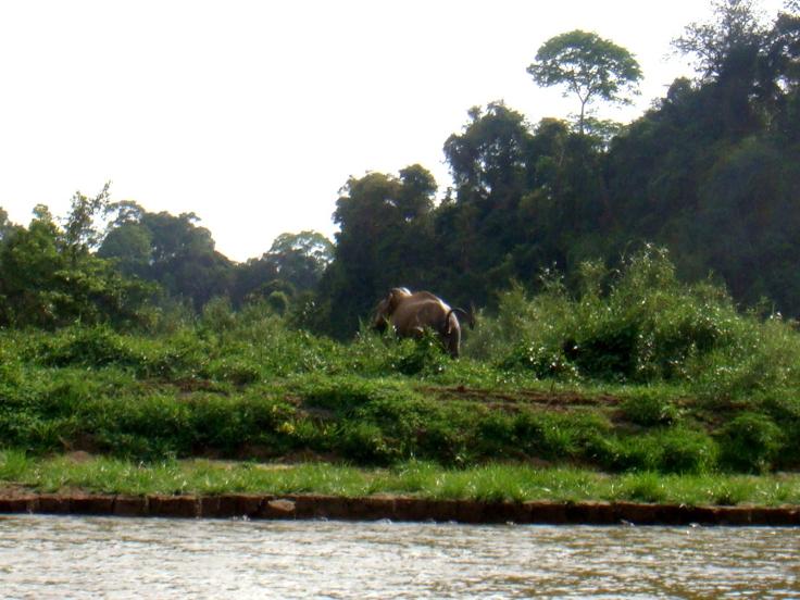 wild elephant decides to leave...
