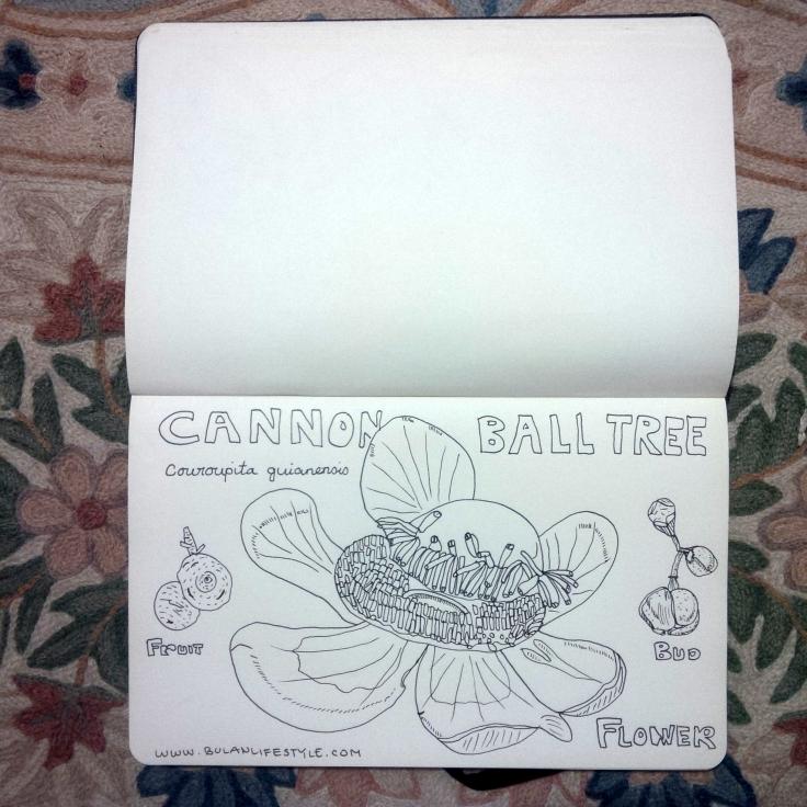 8. Cannonball tree