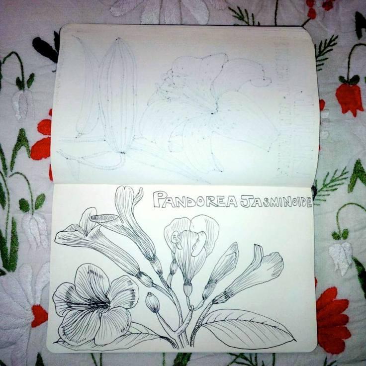 10. Pandorea Jasminoides