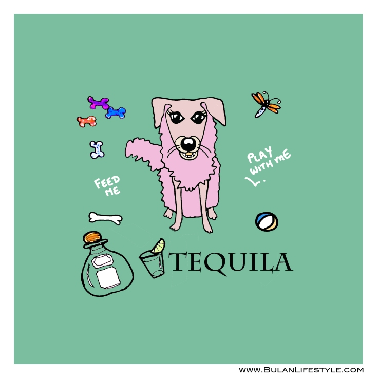 Tequila the dog