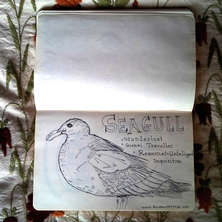 sketch of seagull