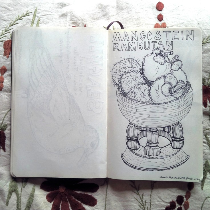 Sketch of Mangostein and Rambutan in a bowl