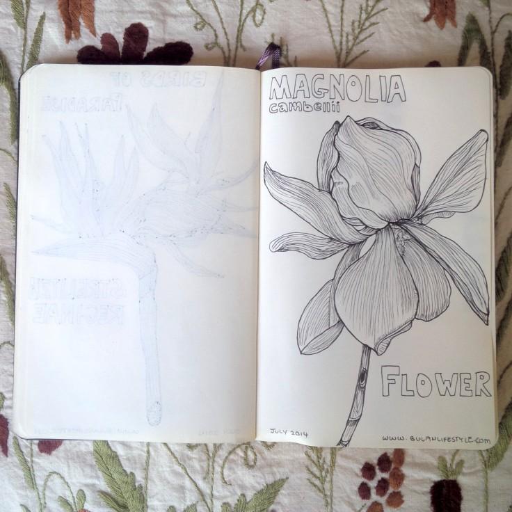 Sketch of magnolia