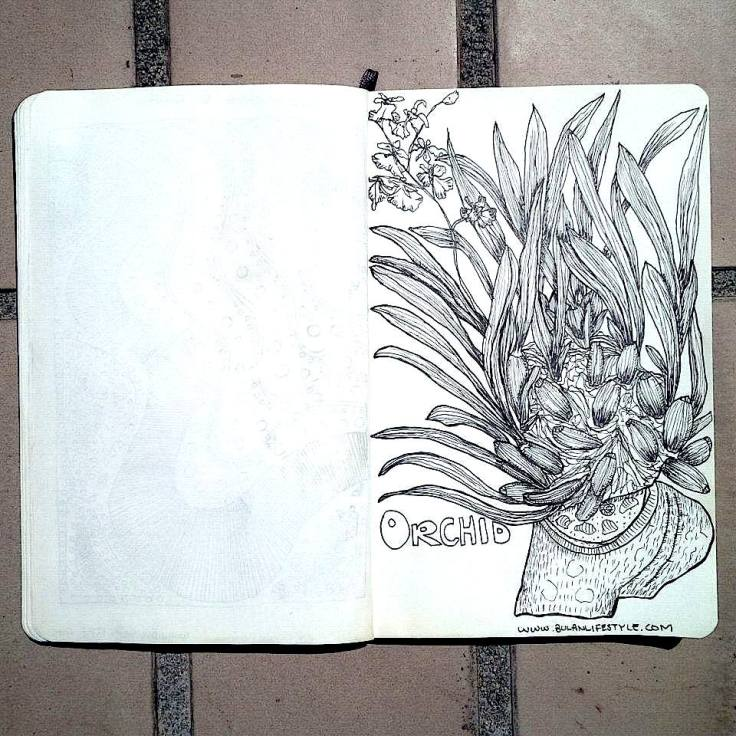 Sketch of Orchid