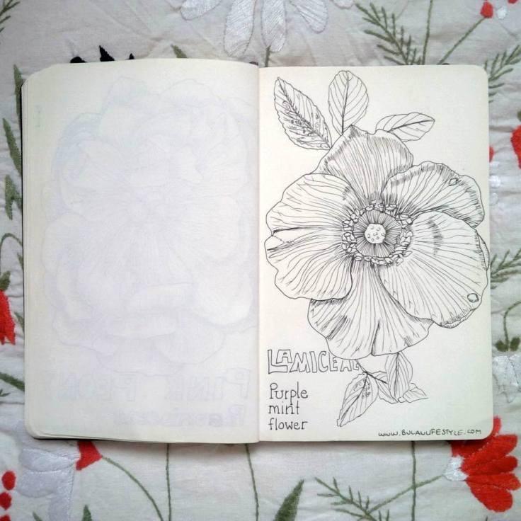 Sketch of Purple mint flower