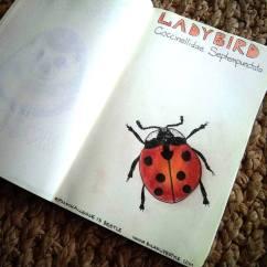 #Spoonchallenge 13 Bug Sketch of ladybird