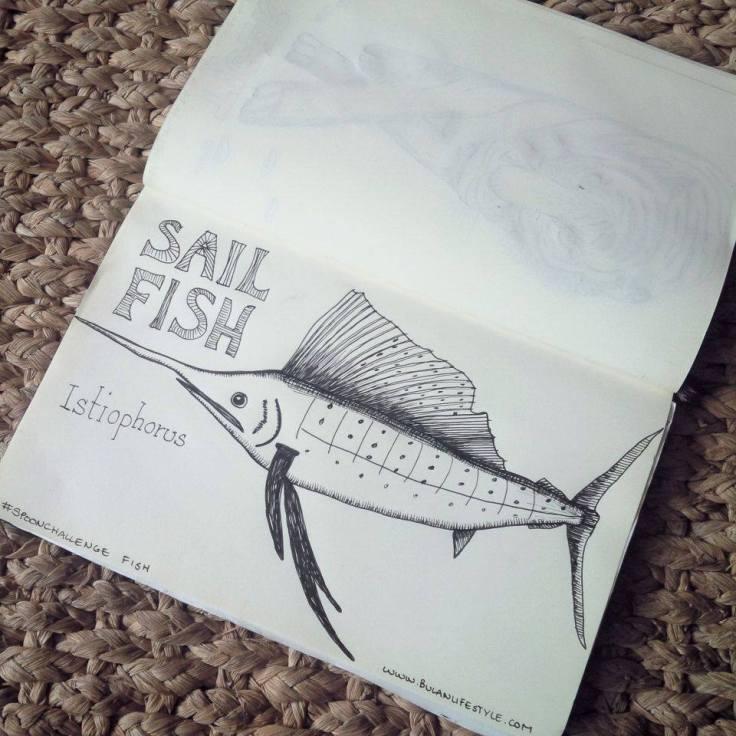 sailfish drawing