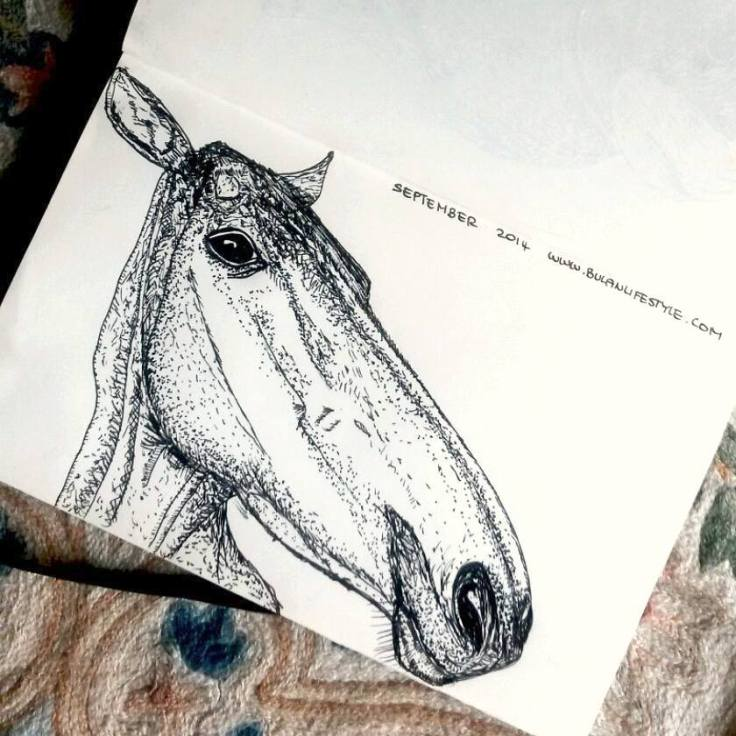 Sketch of Polo Pony