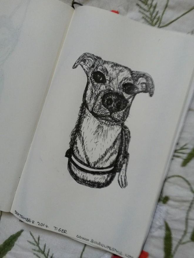 sketch of labrador