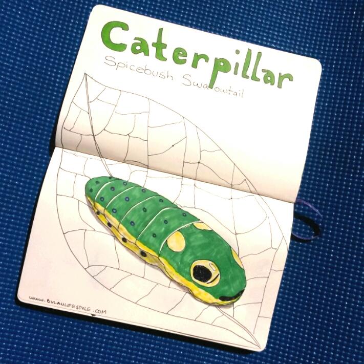 caterpillar spicebush swallowtail