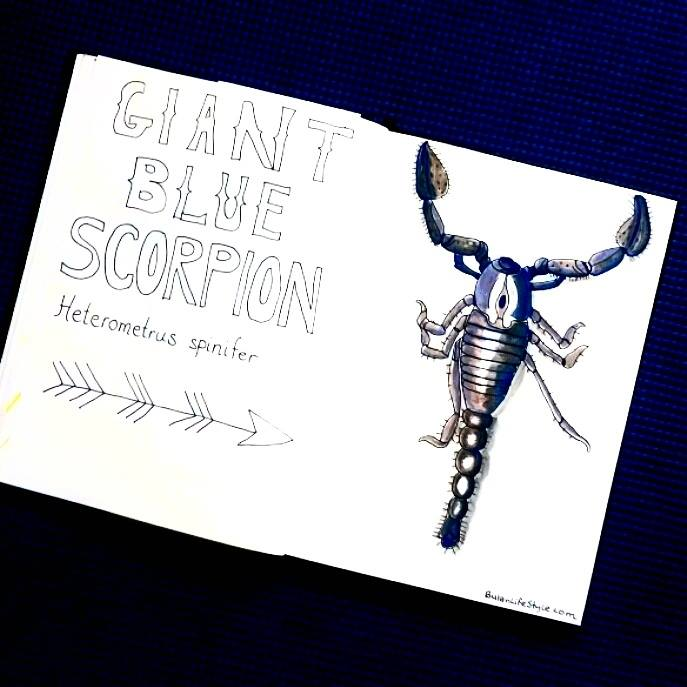 Giant blue scorpion drawing
