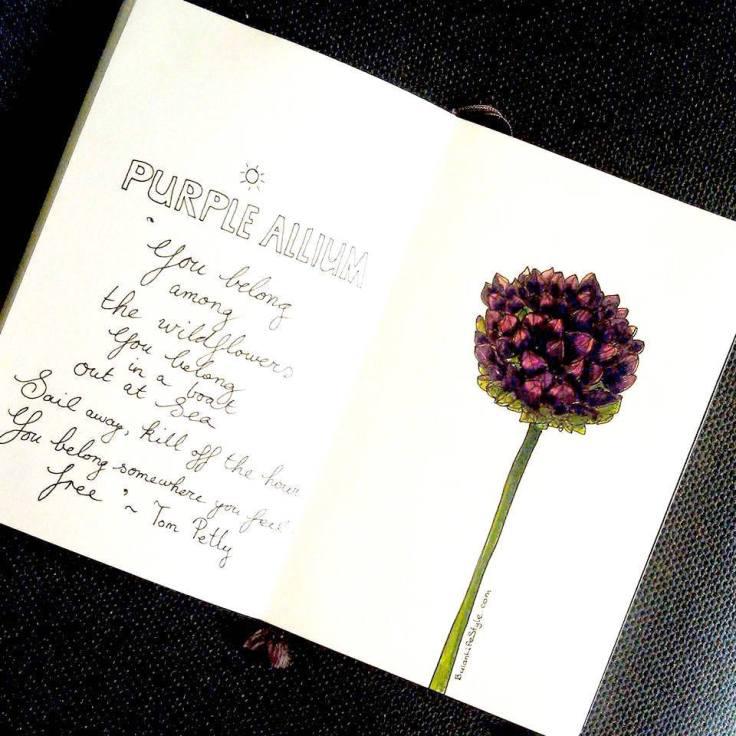 purple allium wildflower from Turkey