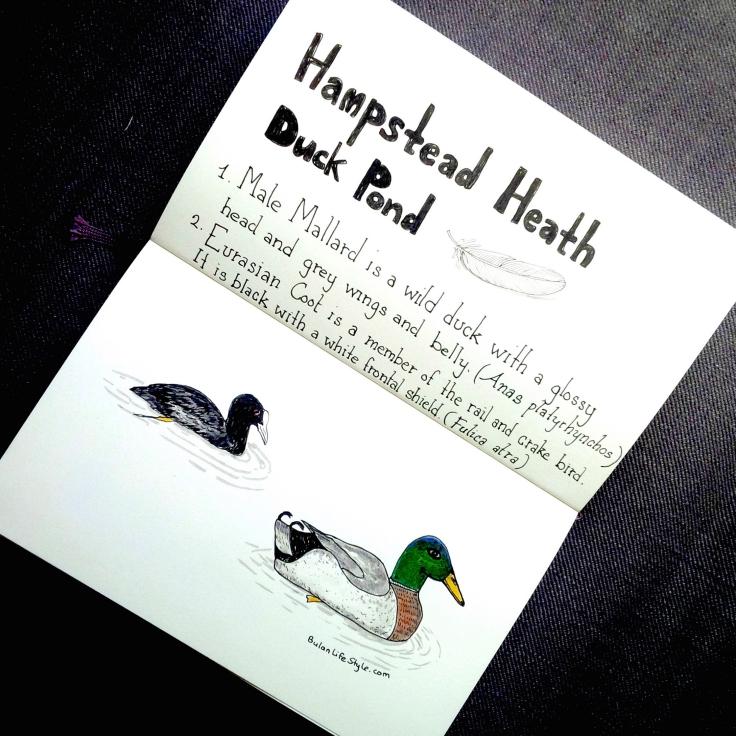 Birdwatching at Hampstead Heath Duck Pond