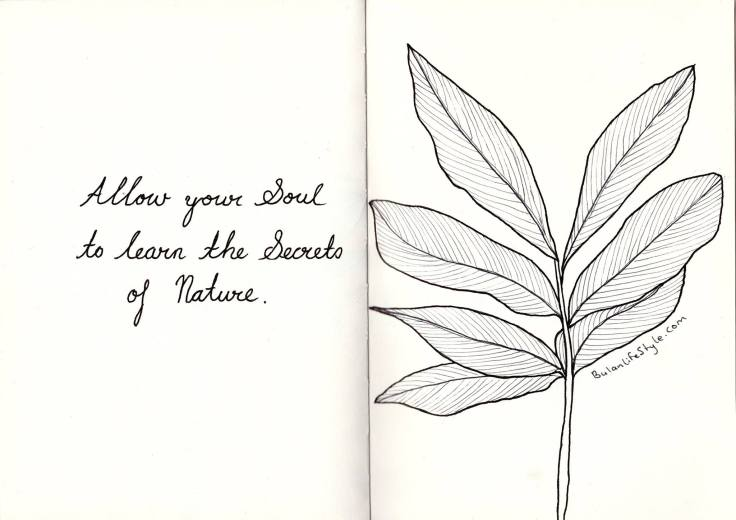 Quote of the day: Allow your soul to learn the secrets of nature