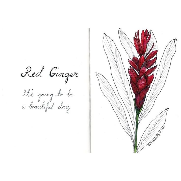 red ginger flower drawing by BulanLifestyle