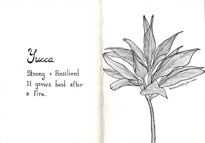 Yucca Plant drawing