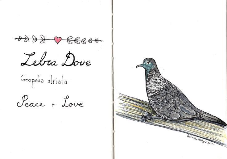 Zebra Dove. Love and Peace