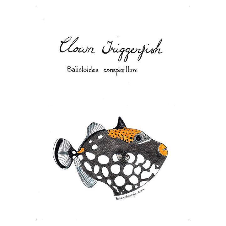 Clown triggerfish. Balistoides conspicillum