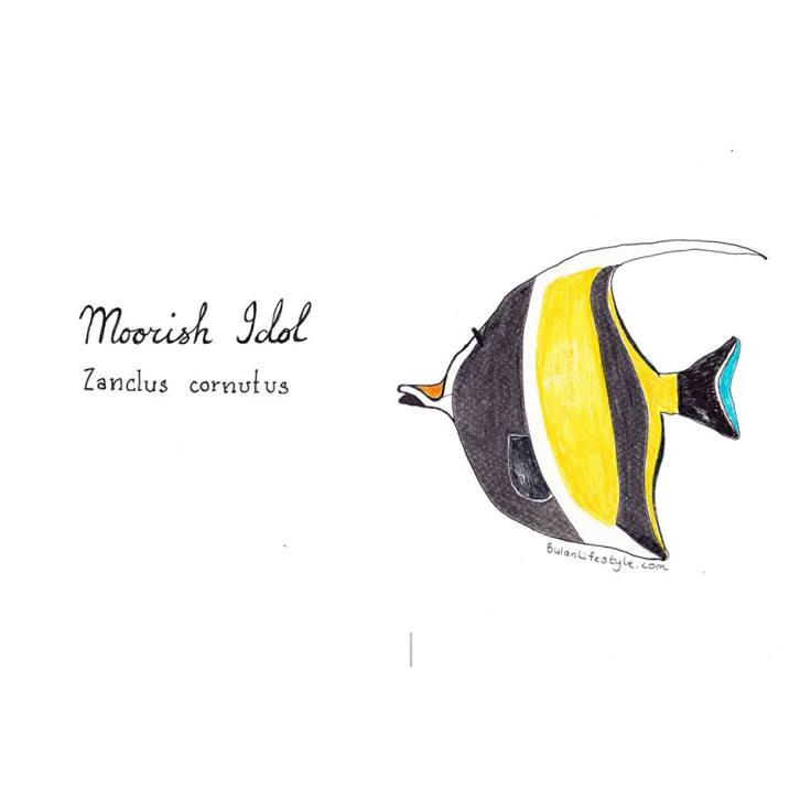 Moorish Idol Tropical reef fish