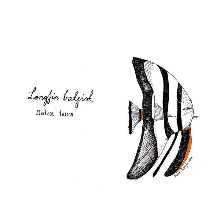 Batfish (Platax Teira)
