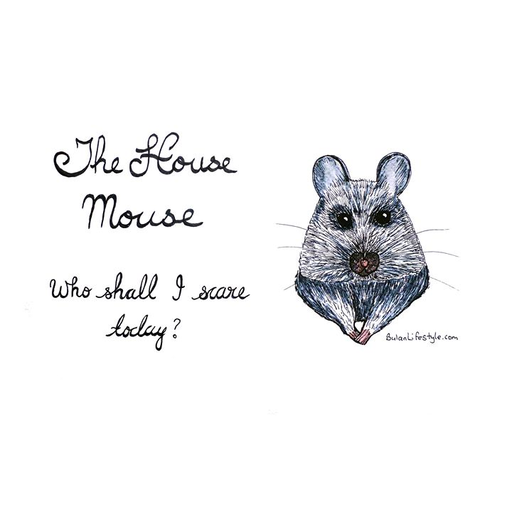 House mouse: Who shall I scare today?