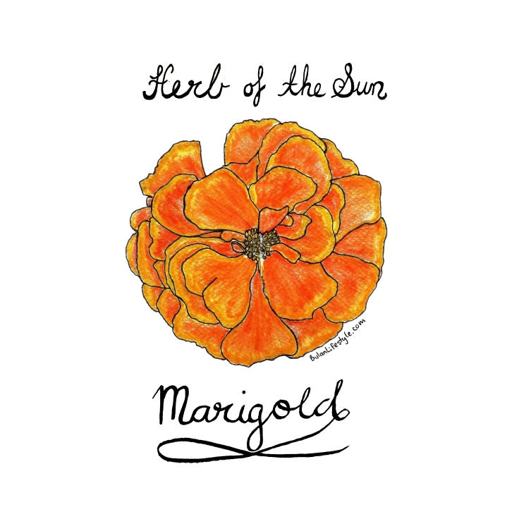 Marigold. Herb of the sun
