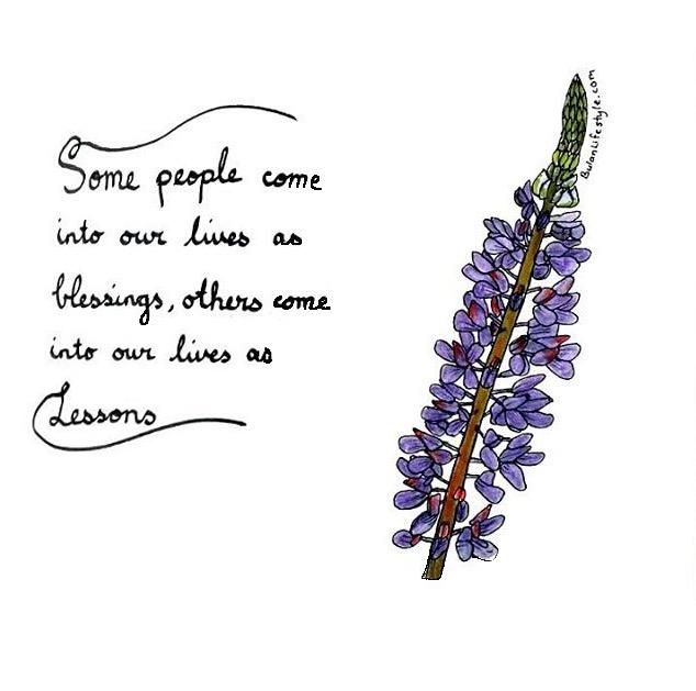 804. Lupine flower