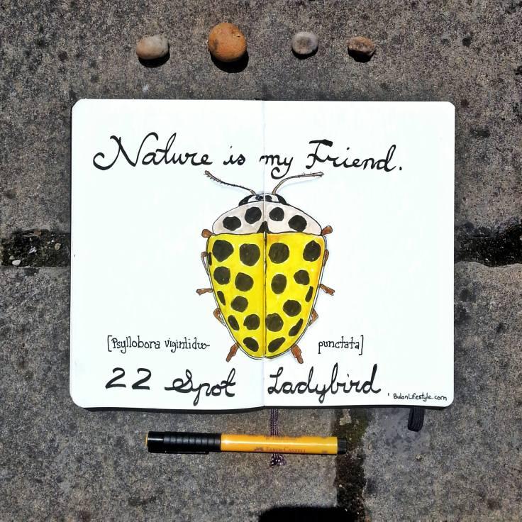 919 Yellow Ladybird