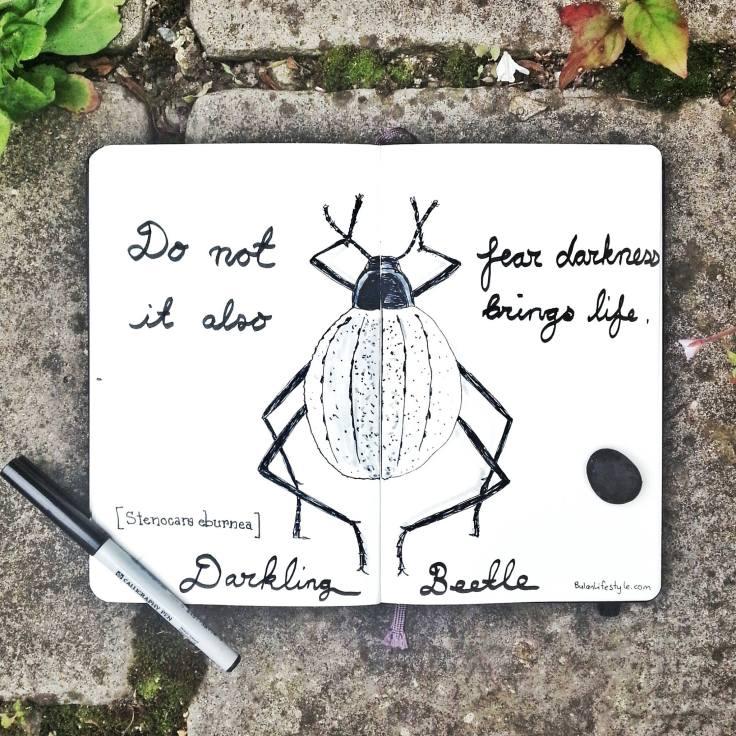 918 Darkling beetle