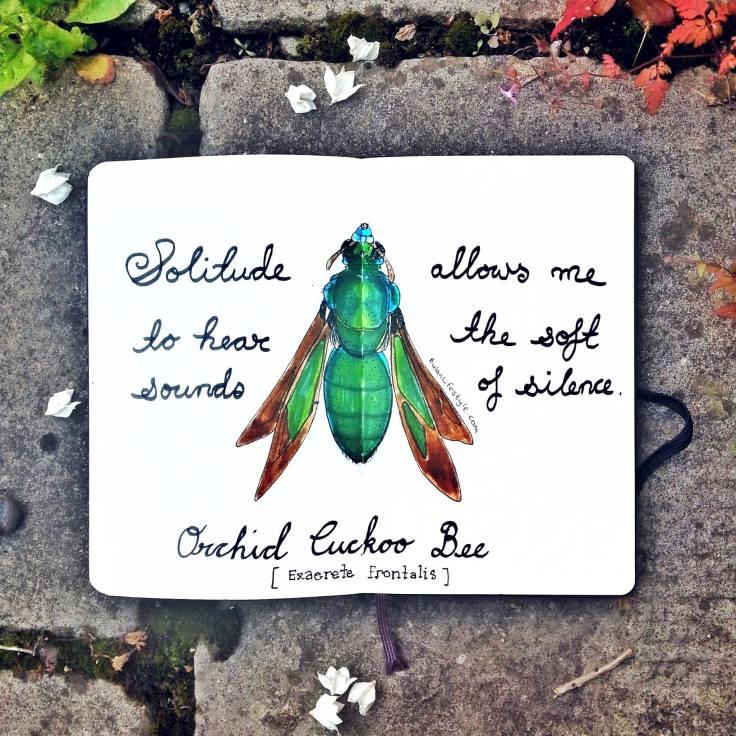 925 Orchid cuckoo bee
