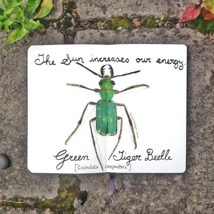 927 Green Tiger Beetle