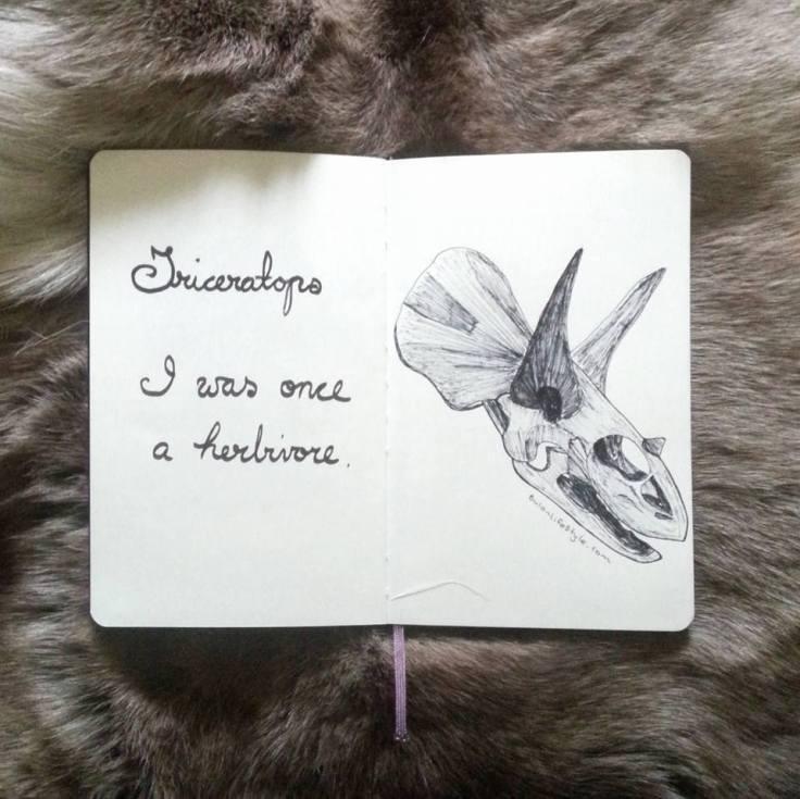 936 triceratops