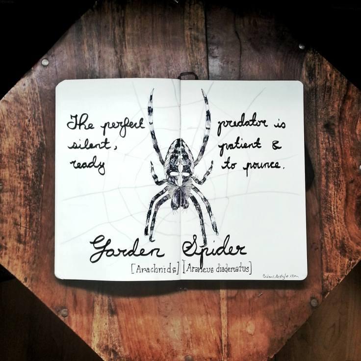 960 Garden Spider