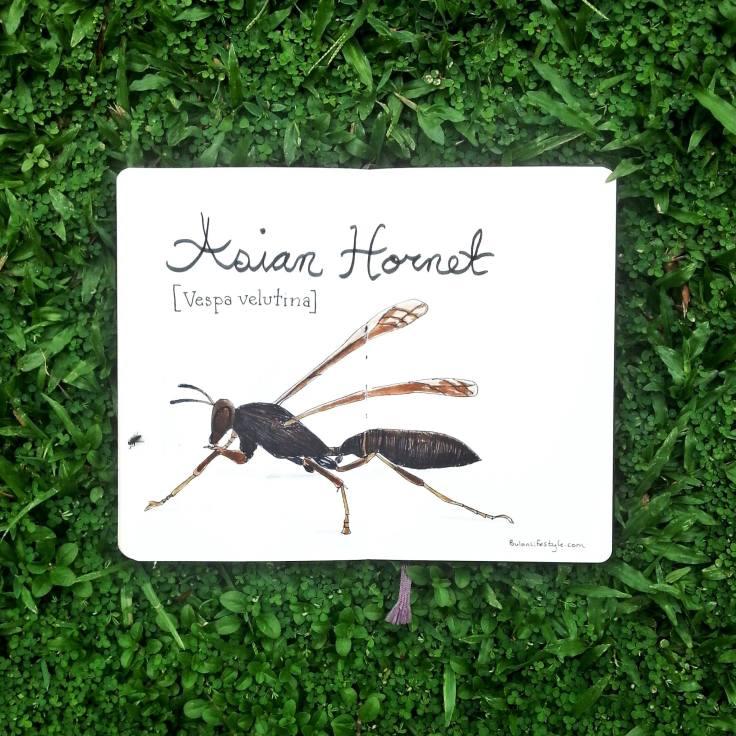 974 Hornet