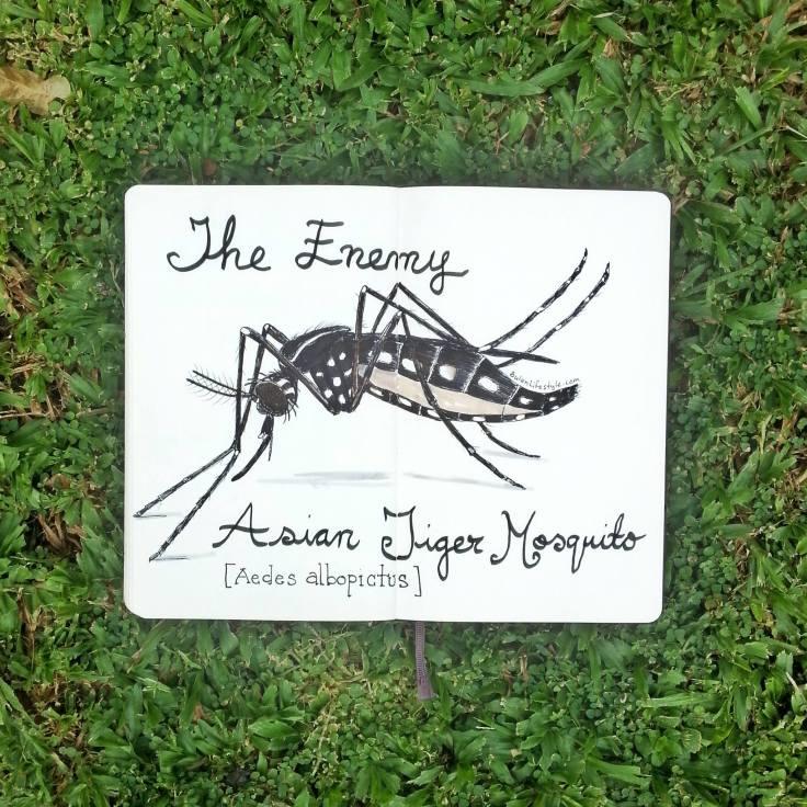 977 Mosquito